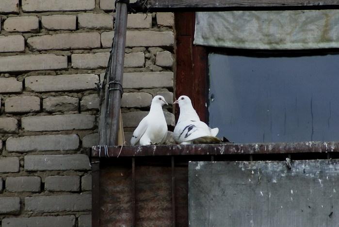 Два белых голубя сидят на балконе