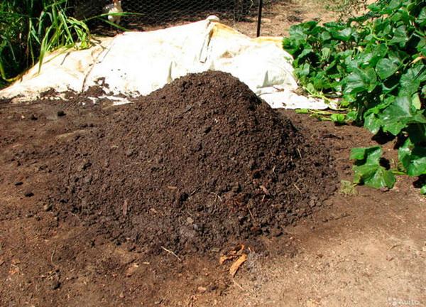Куча куриного компоста во дворе