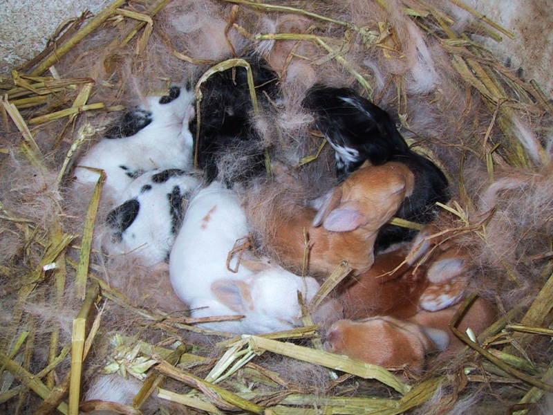 Новорожденные малыши лежат в гнезде