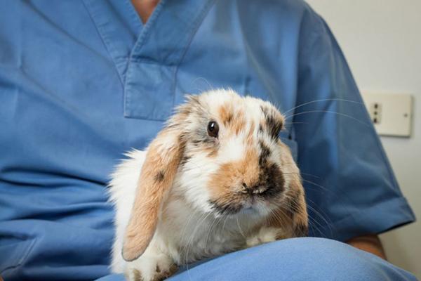 Пятнистый заяц у ветеринара