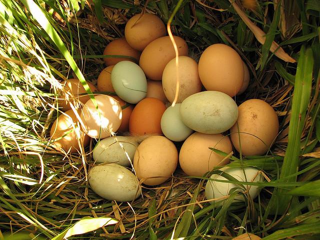 Много яиц в в самодельном гнезде