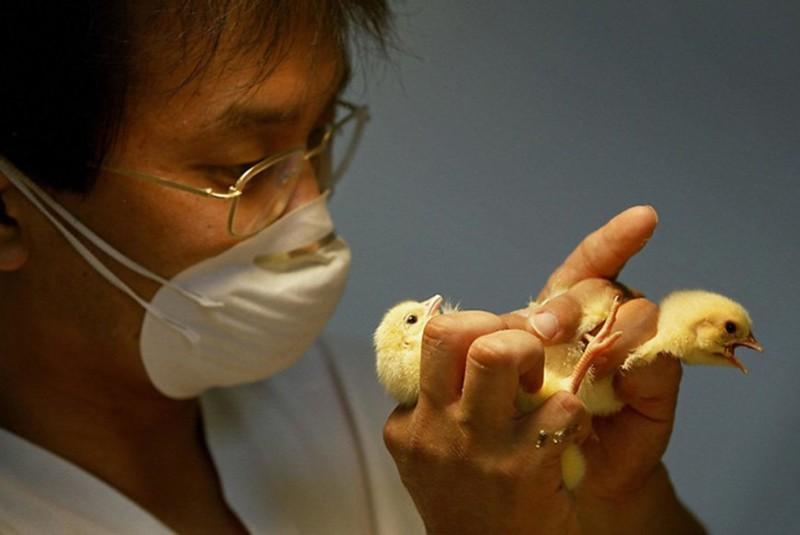 Определение пола птенца в лаборатории
