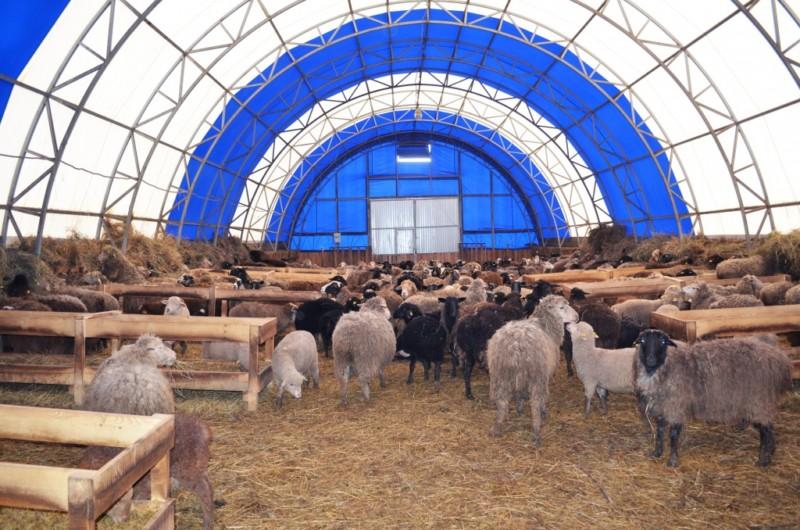 Овчарня купольной формы