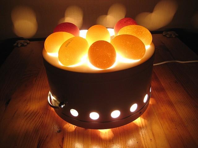 Яйца просвечивают на овоскопе
