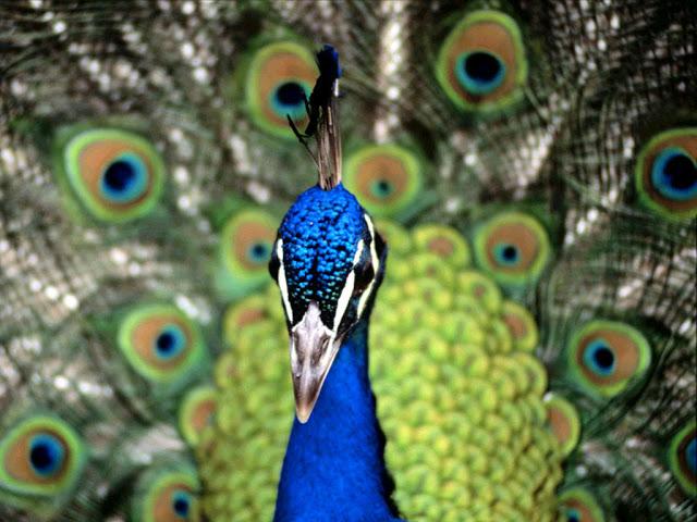 Мордочка на фоне перьев