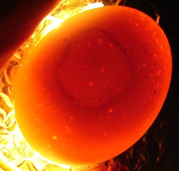 Колонии бактерий внутри яйца