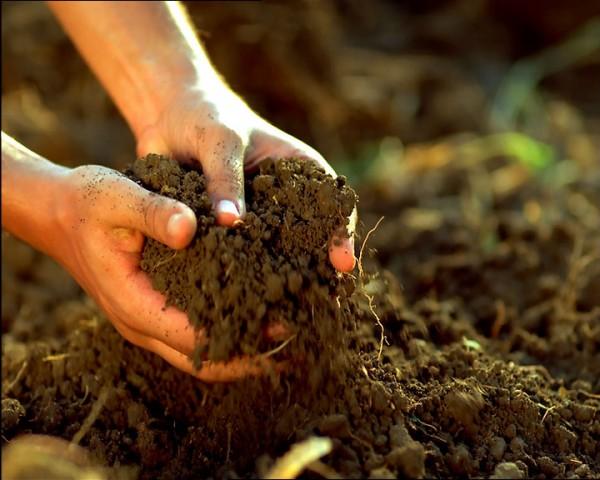 Земля, удобренная перепелиным пометом