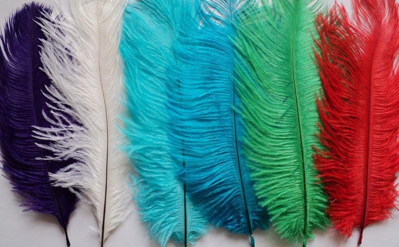 Перья страуса, окрашенные в разные цвета