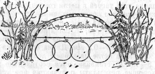 Ловушка при помощи петли