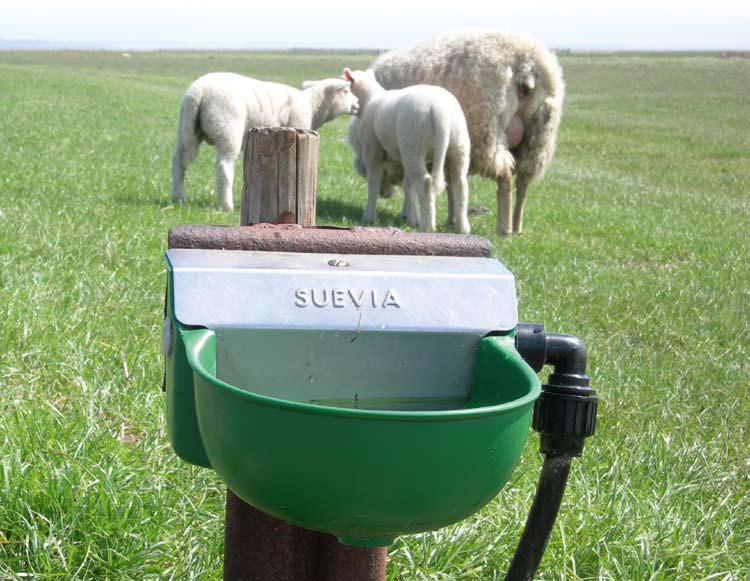 Поилка для овец на пастбище