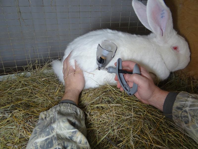 Процедура вакцинации животного