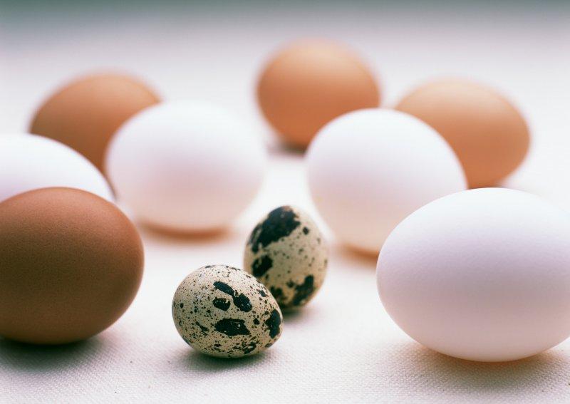 Перепелиные яйца на фоне куриных