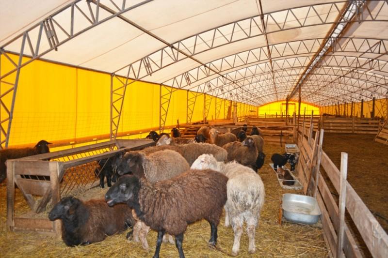 Просторная овчарня с секциями