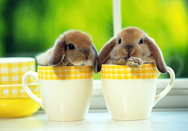Два кролика в чашках