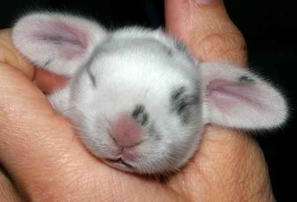 Крольчонок в руках