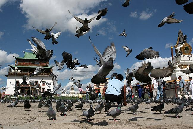 Голуби взлетают на улице