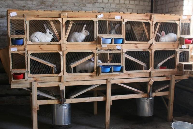 Кролики в клетках в сарае