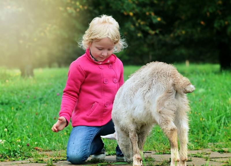 Ребенок рядом с козочкой