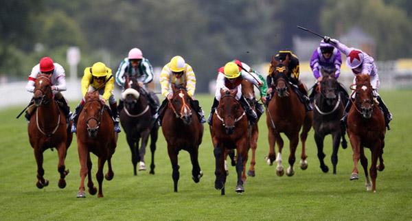 Несколько лошадей мчатся по трассе