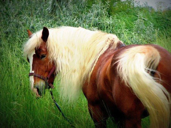Русская лошадь в траве