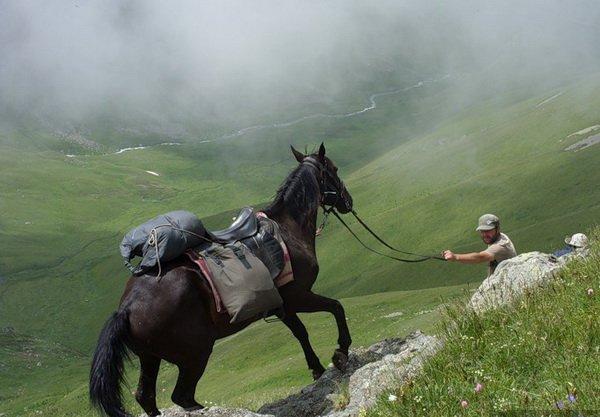 Лошадь в горах с вьюком