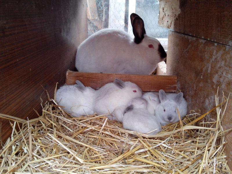 Самка с малышами в отсаднике