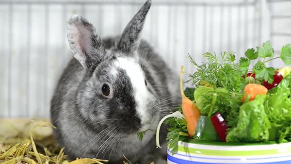 Кролик и зелень, овощи