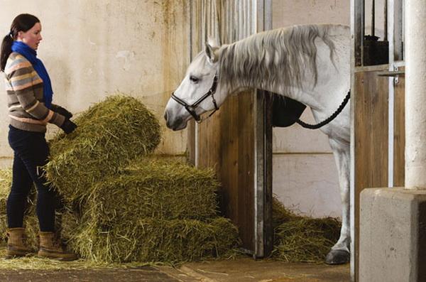 Сено для лошади