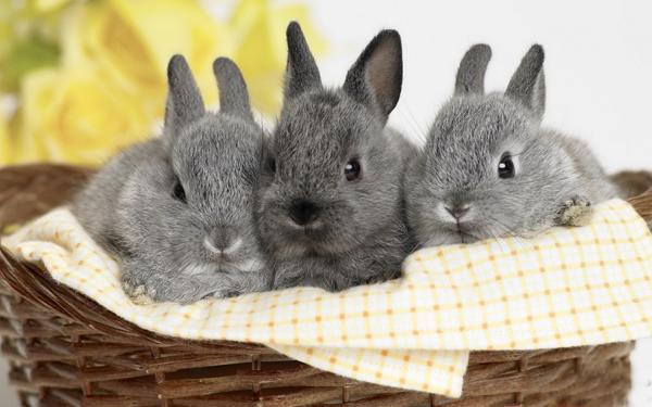 Три маленьких кролика в корзинке