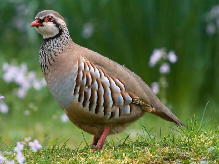 Птичка в естественных условиях
