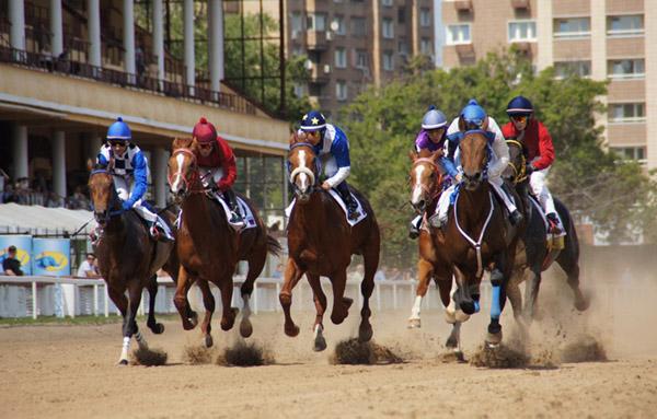Несколько лошадей участвуют в скачках