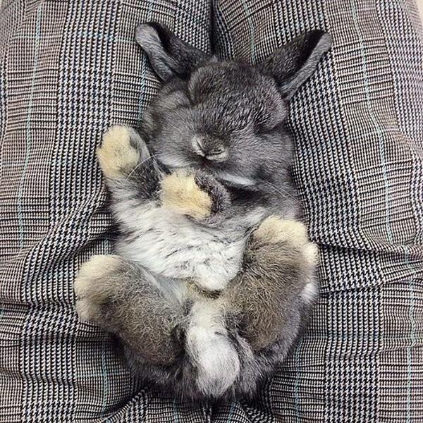 Серый пушистик спит на руках