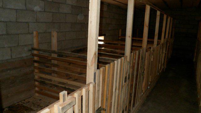 Просторный свинарник в подсобном помещении