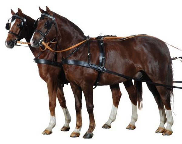 Лошади в упряжи