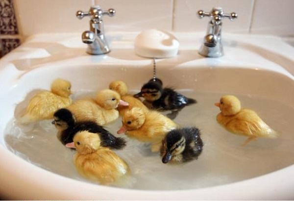 Малыши купаются в раковине