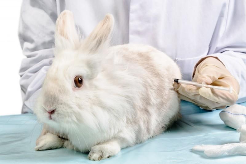 Вакцинация кролика специалистом