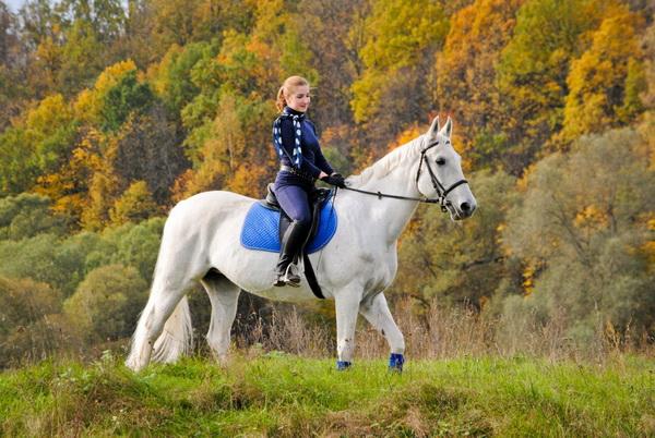 Девушка на белой лошади