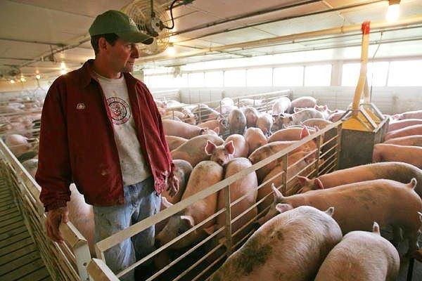 Владелец свинофермы