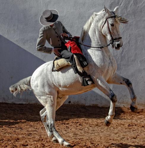 Традиционная испанская выездка