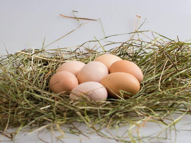 Куриные яйца в гнезде из сена