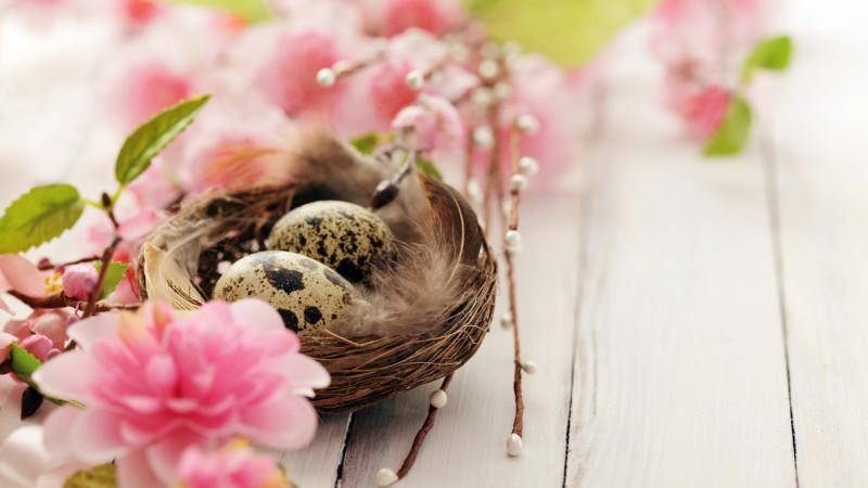 Гнездышко перепела в цветах