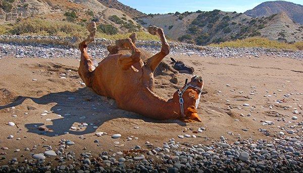 Лошадь катается в песке