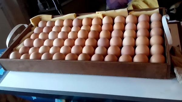 Яйца лежат в лотке