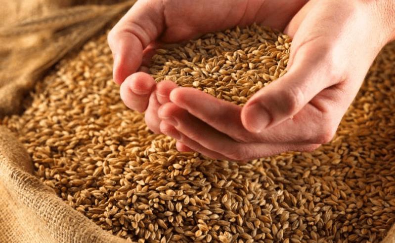 Цельное зерно в руках