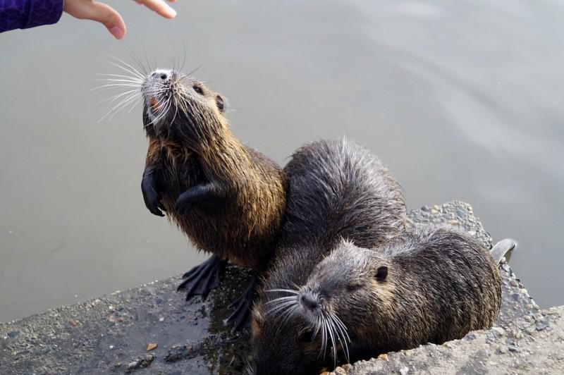 Животное просит еду