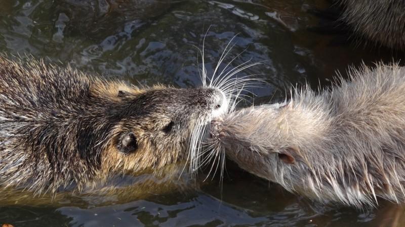 Животные плавают в воде